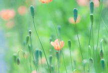 Inspirációk - virágok