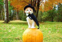 disfraces de gatitos