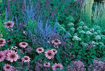 August Afternoons Pre-Planned Garden / When the rest of your garden is taking a late summer snooze, the August Afternoons perennial garden will wake you up with its engaging display of pinks and blues. By combining a pleasing mixture of grasses, flower forms, and colors, this hummingbird and butterfly-attracting garden comes into bloom in August and continues through September. These easy-care plants thrive in most parts of the US and grow well in ordinary garden soil with full sun. Drought resistant/drought tolerant plant (xeric).