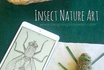 Nature Studies / Charlotte Mason and Reggio Inspired Nature Studies!