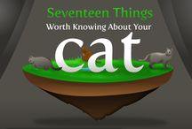 All Things Cat / by Julie Bradshaw