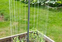 Garden Ideas / by Lynn Pederson