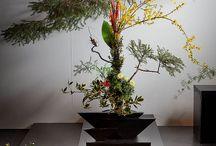 ikebana - bonsai