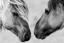 Horses / by Isabella Villani