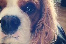 puppies <3 / by Hailey Johnnie