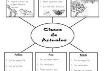 Actividades con los animales