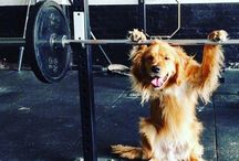 P U P P I E S exercising / Puppies working out
