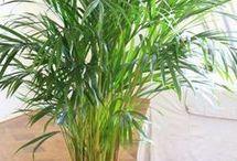 plantas de interior y otras