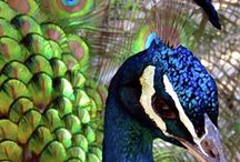 AVES COLORES
