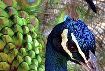πολυχρωμα πουλια
