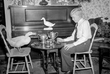1941: A boy and his duck / In Boston, one duckling made its way inside