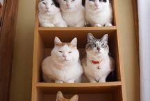Cicák,Cat,Katze