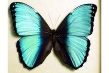 Butterflys / by Ellen De Lenclos