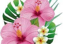 Flores xerOx