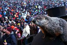 Bucket List / Is Groundhog Day on your bucket list?