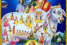 Hindoes