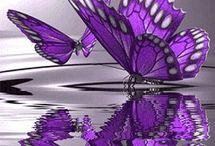 Butterflies / Butterflies / by Adam Clarks