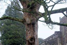 CPM's Photos of Trees