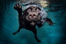 Underwater / by telesepe tim