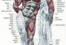 인체그림자료
