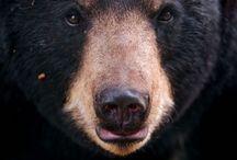 REF: Bears