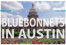 Austin Bluebonnet Guide / Austinites love bluebonnets in the springtime! Here are some of the best spots to see bluebonnets around Austin: