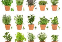 Herbs & Plants