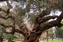 Amazing olives