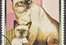 kedi köpek posta pulu