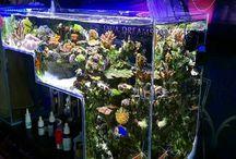 Aquariums i love