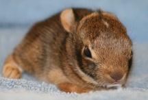 Unbearable Cuteness