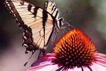 Butterfly Ƹ̴Ӂ̴Ʒ Ƹ̵̡Ӝ̵̨̄Ʒ