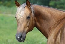 Loving the Horse / Great photos of horses!