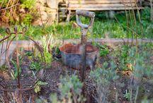 Vegetable Garden Terrace Area