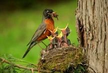 Bird Watching / by Thomas Byers