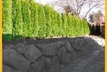 ARTIFICIAL OUTDOOR TREES / ARTIFICIAL OUTDOOR TREES