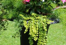 container plant ideas