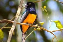 Birds of Panama / Here is just a few of the beautiful birds that you can find here in Panama! Come visit and take the time to take a hike and look for the birds. www.casademontana.com