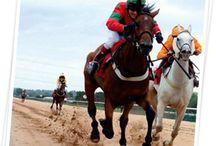 Equine Nutrition / Feeding horses
