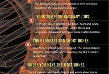 факты о нашем органах и физиологии