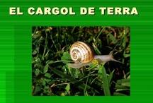 projecte caragols