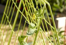 Zahradní Mřížoví na okurky