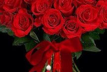 Valentine's Day / .