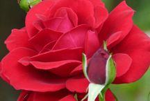 Garden beauts / Everything that should make a garden beautiful
