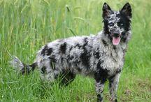 magic dog mudi