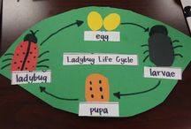 Life cycles children craft