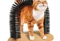 Emílio o gato