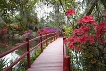 SC Plantations & Gardens / by Discover South Carolina