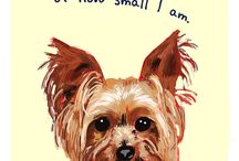 Addie The SUPER Yorkie Dog / by Kristin