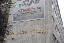 Mammutter / Mammutter - kæmperne fra Rusland  Særudstilling på Zoologisk Museum 4. oktober 2013 - 1. august 2014 Grafikhuset har udarbejdet den grafiske identitet og udstillingens grafik.